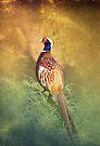 Male Pheasant by Carol Bleasdale