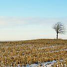 Tree on a corn field! by vasu