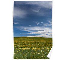 Dandelion fields Poster