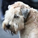 airedale terrier  by mrivserg