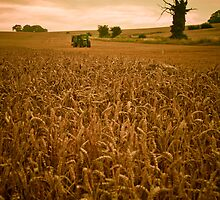 The Art of Farming,Horsecroft Farm,Bury St Edmunds by Suffolk Photography