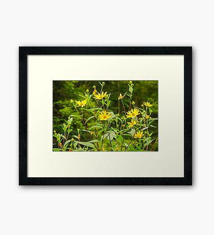 Chokeweeds Framed Print
