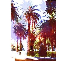 Tropical Palm Trees, beach Photographic Print