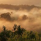 Above the Mist by debsphotos