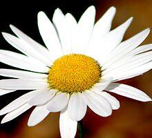 Daisy by Hayley R. Howard
