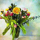 Spring Boquete by zzsuzsa
