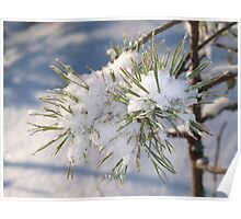 Snow in spruce tree Poster