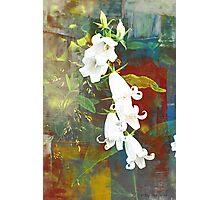 White Bells Photographic Print