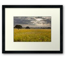 Golden Texas Wildflowers Field after Sunrise Framed Print