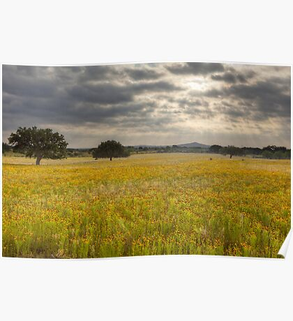 Golden Texas Wildflowers Field after Sunrise Poster