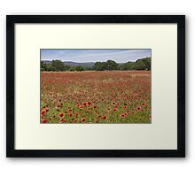 Texas Wildflowers Explode in a Sea of Red Framed Print