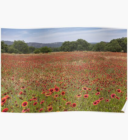 Texas Wildflowers Explode in a Sea of Red Poster
