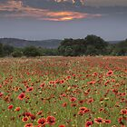 Texas Wildflowers on a Late Sunrise Morning by RobGreebonPhoto