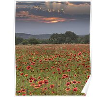 Texas Wildflowers on a Late Sunrise Morning Poster