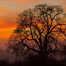 Garry Oak In February  by BarryHetschko