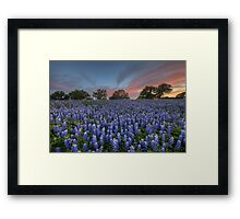 Bluebonnet Field of Glory, San Saba County, Texas Framed Print