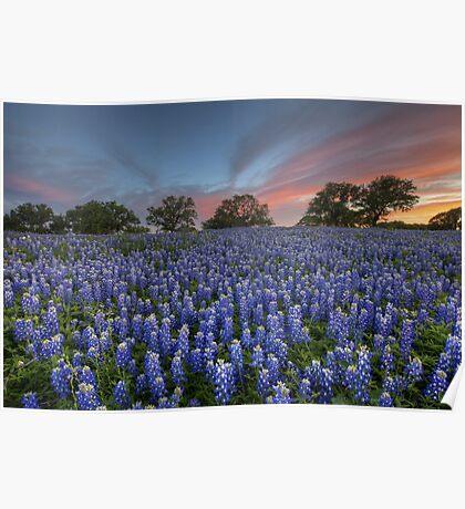 Bluebonnet Field of Glory, San Saba County, Texas Poster
