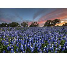 Bluebonnet Field of Glory, San Saba County, Texas Photographic Print