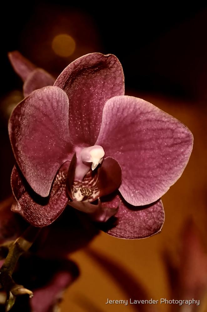 Feeling pretty... by Jeremy Lavender Photography