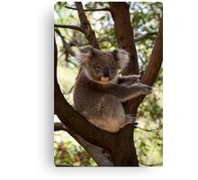 Dindi Learning To Pose Canvas Print
