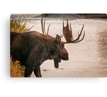 Bull Moose at the Snake River Canvas Print