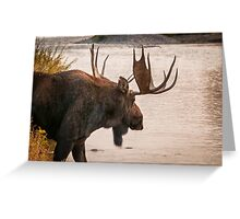 Bull Moose at the Snake River Greeting Card