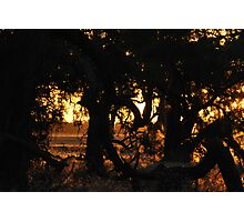 Rural Silhouette Photographic Print