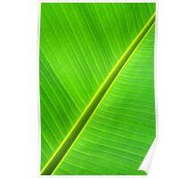 Banana Leaf Sabre Poster