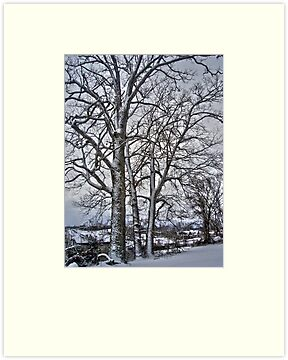 Winter Trees by Susan S. Kline