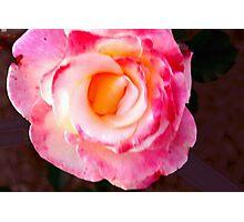 Pink rose macro Photographic Print