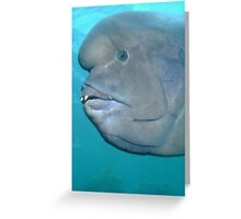 Double Header Wrasse Greeting Card