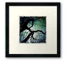 Weeping Branches Framed Print