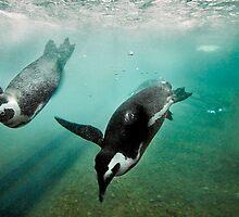 swim. by Tristan Duplichain