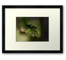 Patience is a virtue. (2) Framed Print