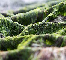 Seaweed Texture by JosePracek