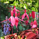 End of Summer - Coleus and Fuchsia Collage by BlueMoonRose