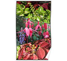 End of Summer - Coleus and Fuchsia Collage Poster