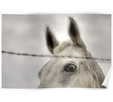Horse Behind Wire Poster