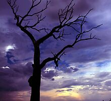 Summer Hill Tree Dusk ... by Erin Davis