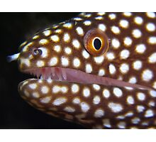 Moray Eel, Tonga Photographic Print