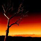 Summer Hill Tree - Fire Sky ... by Erin Davis
