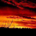 Ballarat Sunset No 2 ... by Erin Davis