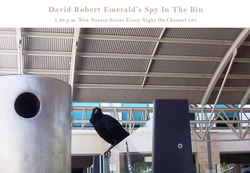 Spy In The Bin Five by Robert Phillips