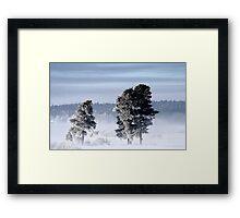 25.2.2013: Pine Trees, Winter Morning Framed Print