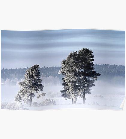 25.2.2013: Pine Trees, Winter Morning Poster