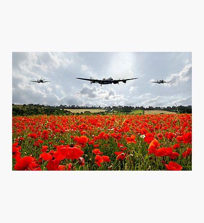 Poppy Flypast Photographic Print