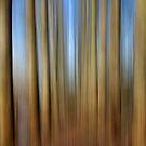 Tall Trees by Karen Boyd