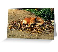 street dog :) Greeting Card