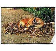 street dog :) Poster
