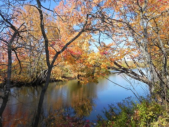 Fall Reflections by Martha Medford